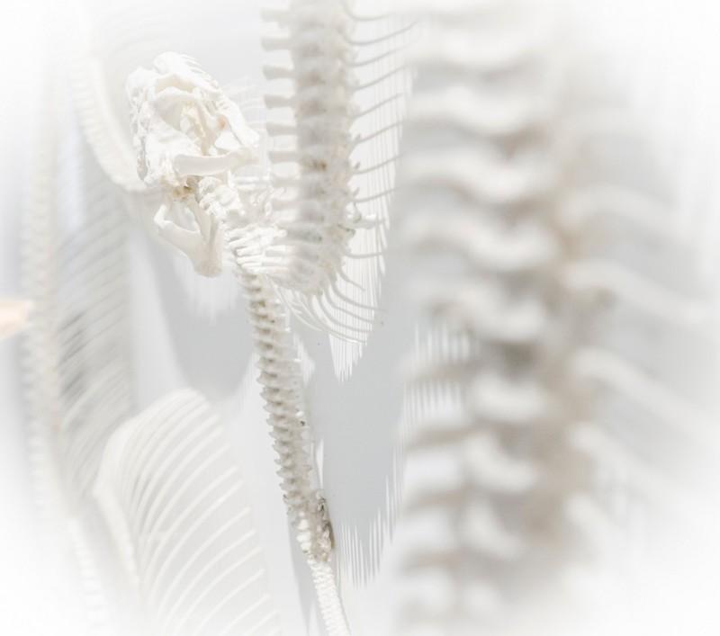 Skelett und Körper