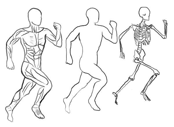 Muskeln Haut und Knochen