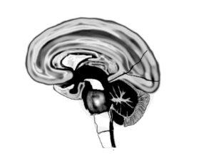 Das zentrale Nervensystem in der Osteopathie