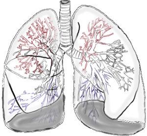 Atemtherapie und dafür eine skizzierte Lunge eines Menschen